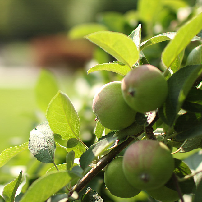 The LaurelRock Company provides sustainable offerings including planting orchards.